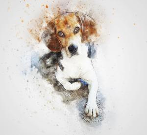 dog-2737263_1920